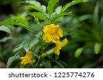 soft focus close up yellow... | Shutterstock . vector #1225774276