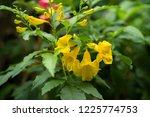soft focus close up yellow... | Shutterstock . vector #1225774753
