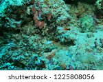 sipadan island  malaysia | Shutterstock . vector #1225808056