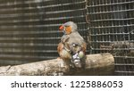the zebra finch is the most... | Shutterstock . vector #1225886053