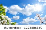 sunny sky and spring branches | Shutterstock . vector #1225886860