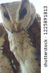 the oriental bay owl is a type...   Shutterstock . vector #1225891813