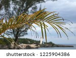 tree and palm branch   Shutterstock . vector #1225904386