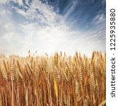 wheat in the farm | Shutterstock . vector #1225935880