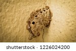 Wasp's Nest On The Wall.