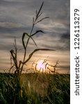 corn field for biogas | Shutterstock . vector #1226113279
