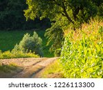 corn field for biogas | Shutterstock . vector #1226113300