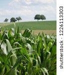 corn field for biogas | Shutterstock . vector #1226113303