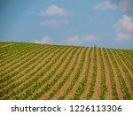 corn field for biogas | Shutterstock . vector #1226113306