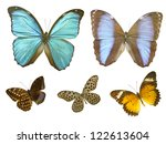 butterfly on white | Shutterstock . vector #122613604