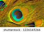 peacock feathers texture.... | Shutterstock . vector #1226165266