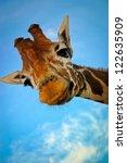 giraffe | Shutterstock . vector #122635909