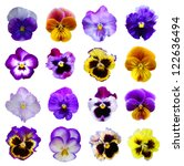 Stock photo pansies on white background 122636494