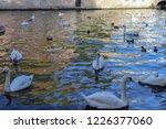 an early morning scene of swans ... | Shutterstock . vector #1226377060
