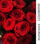 Stock photo photo of several red roses with saturated effect 1226380930
