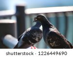foreground background... | Shutterstock . vector #1226449690