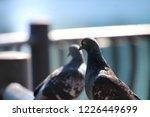 foreground background... | Shutterstock . vector #1226449699