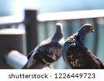 foreground background... | Shutterstock . vector #1226449723
