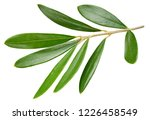 olive green leaves isolated on... | Shutterstock . vector #1226458549