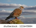 Turtle Doves Can Be Found In...