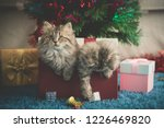 cute two persian kittens... | Shutterstock . vector #1226469820