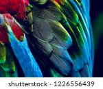 stunning macaw plumage pattern | Shutterstock . vector #1226556439