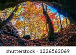 autumn forest cave view. forest ...   Shutterstock . vector #1226563069