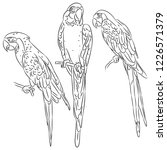 macaw set black sketch isolated ... | Shutterstock . vector #1226571379