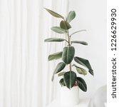 home plant in flowerpot.... | Shutterstock . vector #1226629930