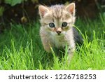 Stock photo sweet kitten in the garden 1226718253
