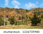 view of the autumn leaves of...   Shutterstock . vector #1226735980