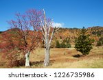 view of the autumn leaves of...   Shutterstock . vector #1226735986