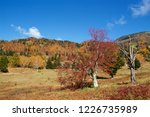 view of the autumn leaves of...   Shutterstock . vector #1226735989