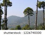 beautiful lush green pine tree... | Shutterstock . vector #1226740330