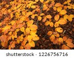 yellow leaves in a beech forest ... | Shutterstock . vector #1226756716