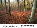 the colors of autumn. yellow... | Shutterstock . vector #1226757373