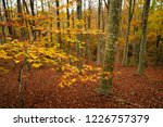 the colors of autumn. yellow... | Shutterstock . vector #1226757379