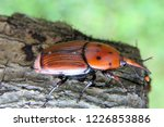 large rusty red colour palm... | Shutterstock . vector #1226853886