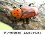 large rusty red colour palm... | Shutterstock . vector #1226854366