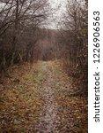 autumn forest  late fall season.... | Shutterstock . vector #1226906563