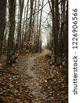 autumn forest  late fall season.... | Shutterstock . vector #1226906566