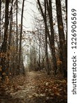 autumn forest  late fall season.... | Shutterstock . vector #1226906569