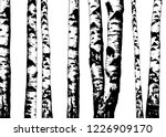 Birch Trees. Vector Backgroun...