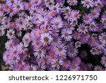 summer purple lilac flowers...   Shutterstock . vector #1226971750