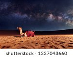camel animal is sitting on the... | Shutterstock . vector #1227043660