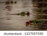 folkestone  kent  uk   november ... | Shutterstock . vector #1227057550
