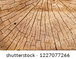 cut tree a huge stump with cuts ...   Shutterstock . vector #1227077266