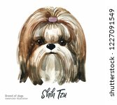 portrait cute dog isolated on... | Shutterstock . vector #1227091549