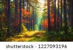 autumn nature landscape of... | Shutterstock . vector #1227093196