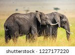 Two Elephants In The Savannah....